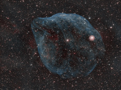 The Dolphin Head Nebula
